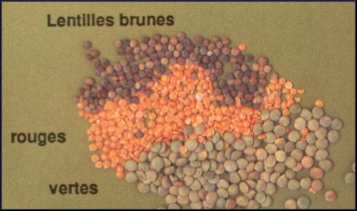 La Lentille verte, rouge, Beluga ou du Puy
