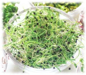 Les bienfaits de la germination pour l'organisme