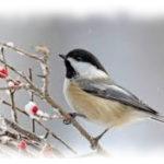 Booster ses défenses immunitaires avant l'hiver